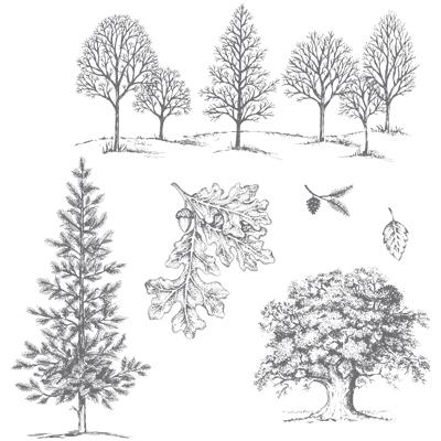 Nature's Poem Graduation Announcements
